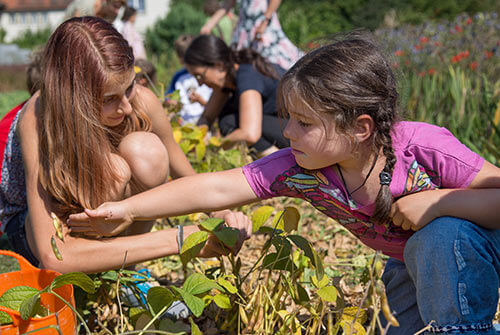 Kinder suchen Kräuter