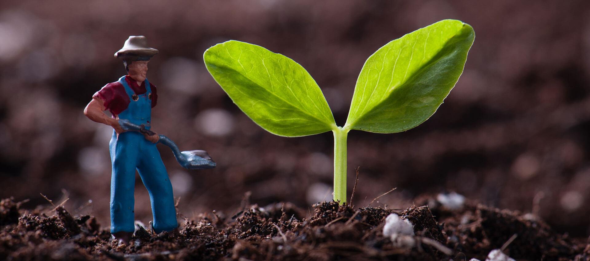 Gärtner pflanzt Pflanze