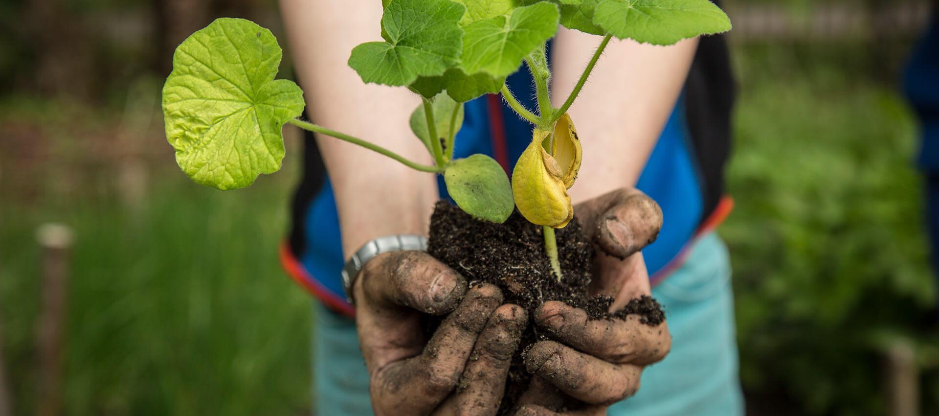 Kinderhände mit Pflanze